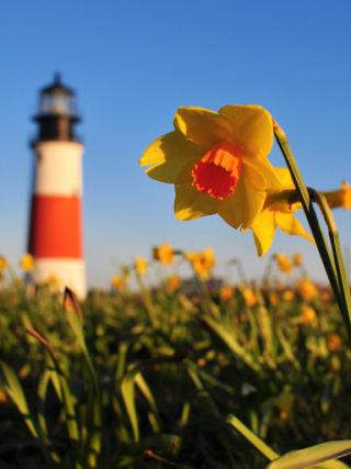 Nantucket is Almost, baaa~'ACK'!